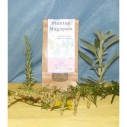 Plantes à fumée